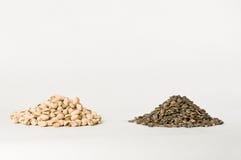 Tournesol et pistaches Image stock