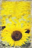Tournesol jaune lumineux, Thaïlande Digital Art Impasto Oil Paint illustration de vecteur
