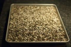 tournesol rôti de graines Image libre de droits