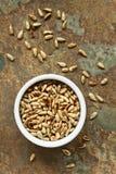 tournesol rôti de graines Photos libres de droits