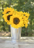 Tournesols dans le vase en aluminium photos stock