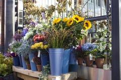Tournesols de floraison Image stock