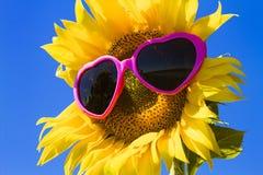 Tournesols jaunes avec des lunettes de soleil de coeur Images stock