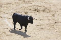 Touro de combate na arena bullring Bravo de Toro spain fotos de stock
