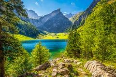 Tourquise duidelijke Seealpsee met de Zwitserse Alpen op de achtergrond, Appenzeller-Land, Zwitserland Stock Fotografie