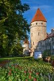 Tours de Tallinn. l'Estonie Image stock