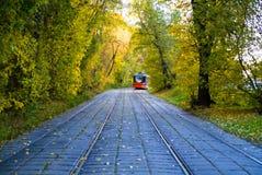 Tours de tram par l'avenue de forêt images libres de droits