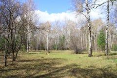 Tous jaillissent ressort dans la forêt Photo libre de droits