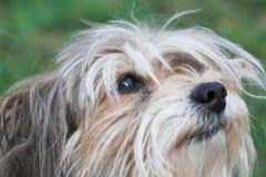 Tousled dog Royalty Free Stock Photo