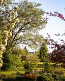 Tout est vert et le pommier de fleur, fleurs fleurissent dans les cavités photos libres de droits