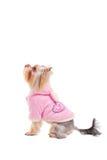 Tout l'amour de chiens il Photographie stock