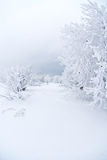 Tout le blanc sous la neige Photographie stock libre de droits