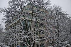 Tout le blanc sous la neige, paysage d'hiver aux arbres couverts de chute de neige importante Photos stock