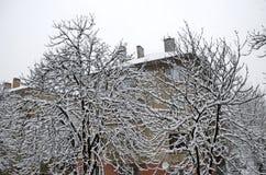 Tout le blanc sous la neige, paysage d'hiver aux arbres couverts de chute de neige importante Photographie stock libre de droits