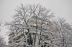 Tout le blanc sous la neige, paysage d'hiver aux arbres couverts de chute de neige importante Images stock