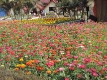 Tout le monde aiment des fleurs Photo libre de droits