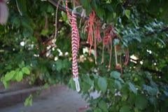 Toute l'année arbre du ` s de martenitsa Photographie stock
