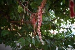 Toute l'année arbre du ` s de martenitsa Images stock