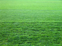 Toute l'herbe verte Photographie stock