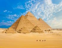 Toute la ligne marche de chameaux de pyramides de l'Egypte grande-angulaire Images stock