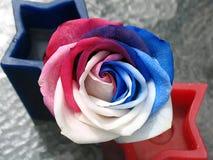 Toute la Rose rouge, blanche et bleue américaine Photo libre de droits