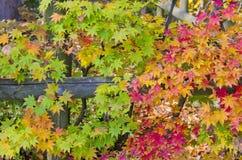 Toutes les couleurs en Autumn Season Photographie stock libre de droits