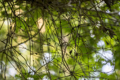 Tova av skogsmarkvinrankor Royaltyfri Bild
