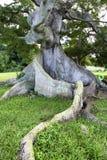 Tova av trädet Arkivbild