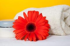 Tovagliolo bagno/della stazione termale e gerbera rosso Fotografia Stock Libera da Diritti