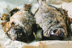 Tow grilled dorado fish Royalty Free Stock Images