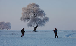 Tow photographers  by a rime tree Royalty Free Stock Image