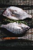 Tow raw dorado fish with rosemary on grill Royalty Free Stock Image