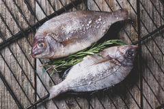 Tow raw dorado fish with rosemary on grill Stock Image