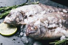 Tow raw dorado fish under with ice Stock Photo