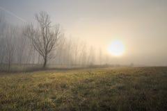 Toward the Sun. HDR shot on a foggy day Stock Photo