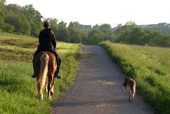 Towards home. Young rider, haflinger horse and german shepherd dog royalty free stock photo