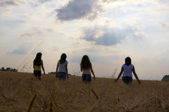 Towards sunset. (four girls go in wheat field stock photos