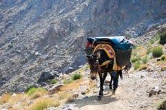 towarowy Morocco muła odtransportowanie Fotografia Stock