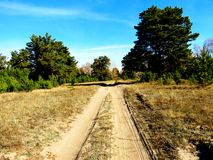 Road into autumn. Towed road stretches far into the green forest Stock Photography