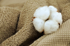 Towel and Cotton Boll. Closeup Stock Photography