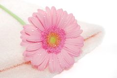 Towel with flower. Towel with a pink beautifu flower closeup on the white background stock photo