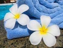Towel and frangipani flowers Stock Photos