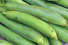 Towel gourd Royalty Free Stock Images