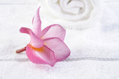 Towel with plumeria flower Stock Image