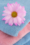 Towels and daisy Royalty Free Stock Photography