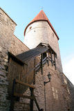 Tower. In Tallinn city wall Stock Photography