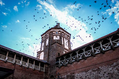 Tower, birds in the sky, birds fly in the sky above the tower Stock Photos