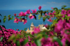 Tower with Bougainville. Camogli church Tower with Bougainville Stock Image