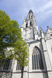 Tower of breda cathedral and green tree in spring Royalty Free Stock Images