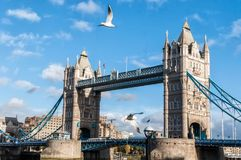 Tower Bridge, London and birds Royalty Free Stock Photography